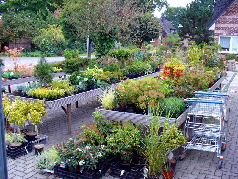 Gartenbau Coesfeld gartenbau coesfeld baumrkte haus u garten coesfeld gartenbau